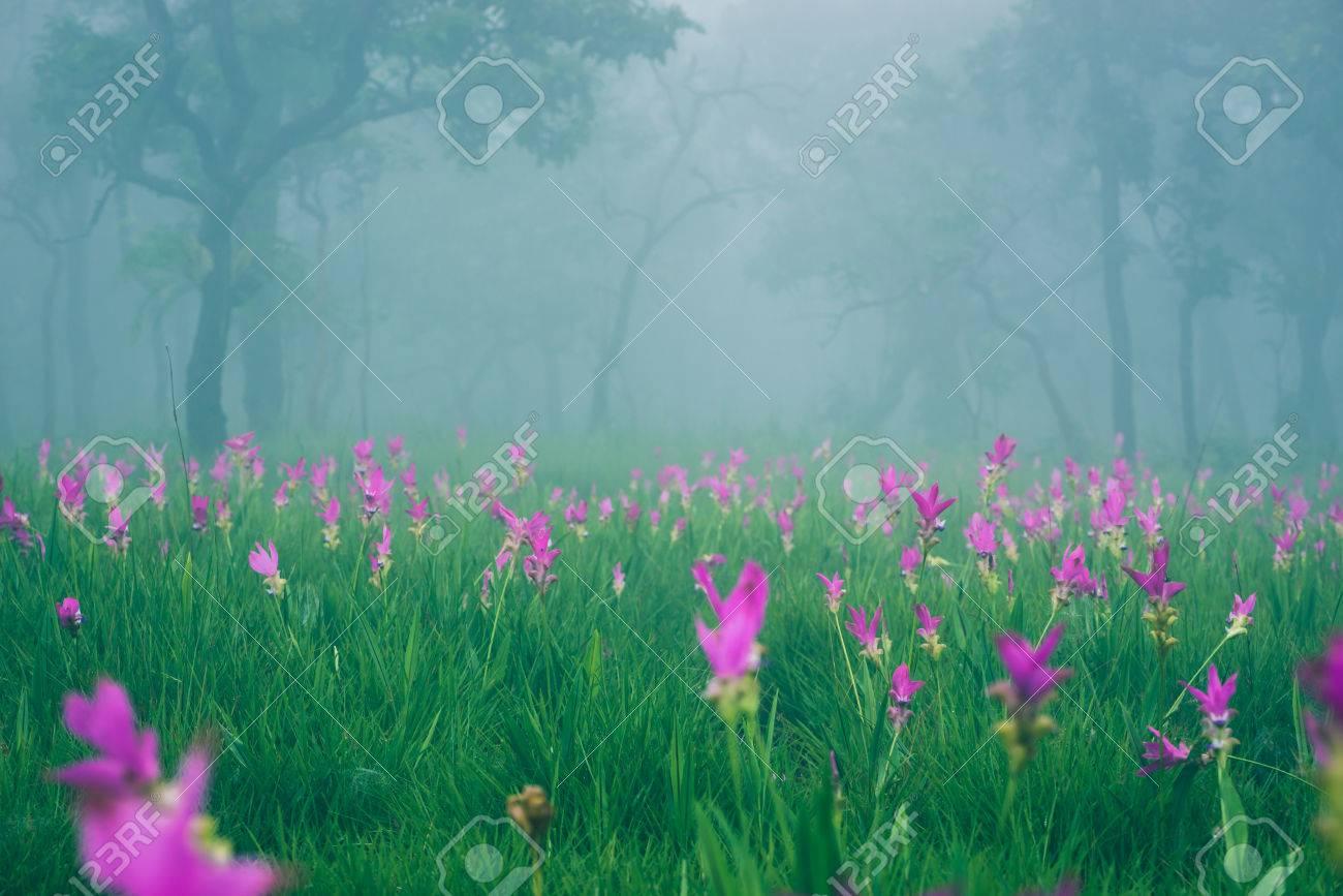 Wallpaper Background Garden Park Outdoor Fog Down Flower