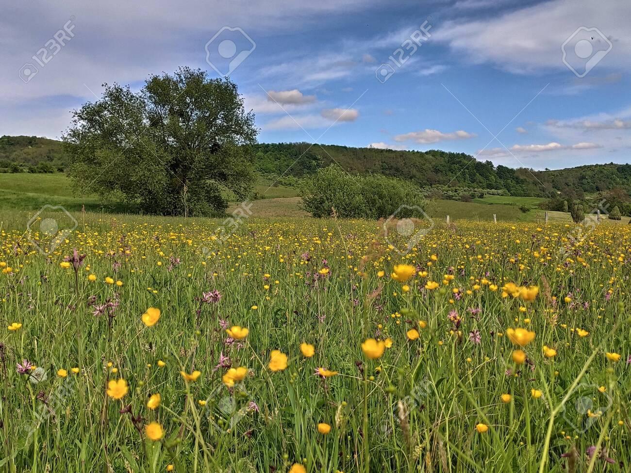 field with flowers in Bistrita Slatinita, ROMANIA, MAY 2020 - 147239819