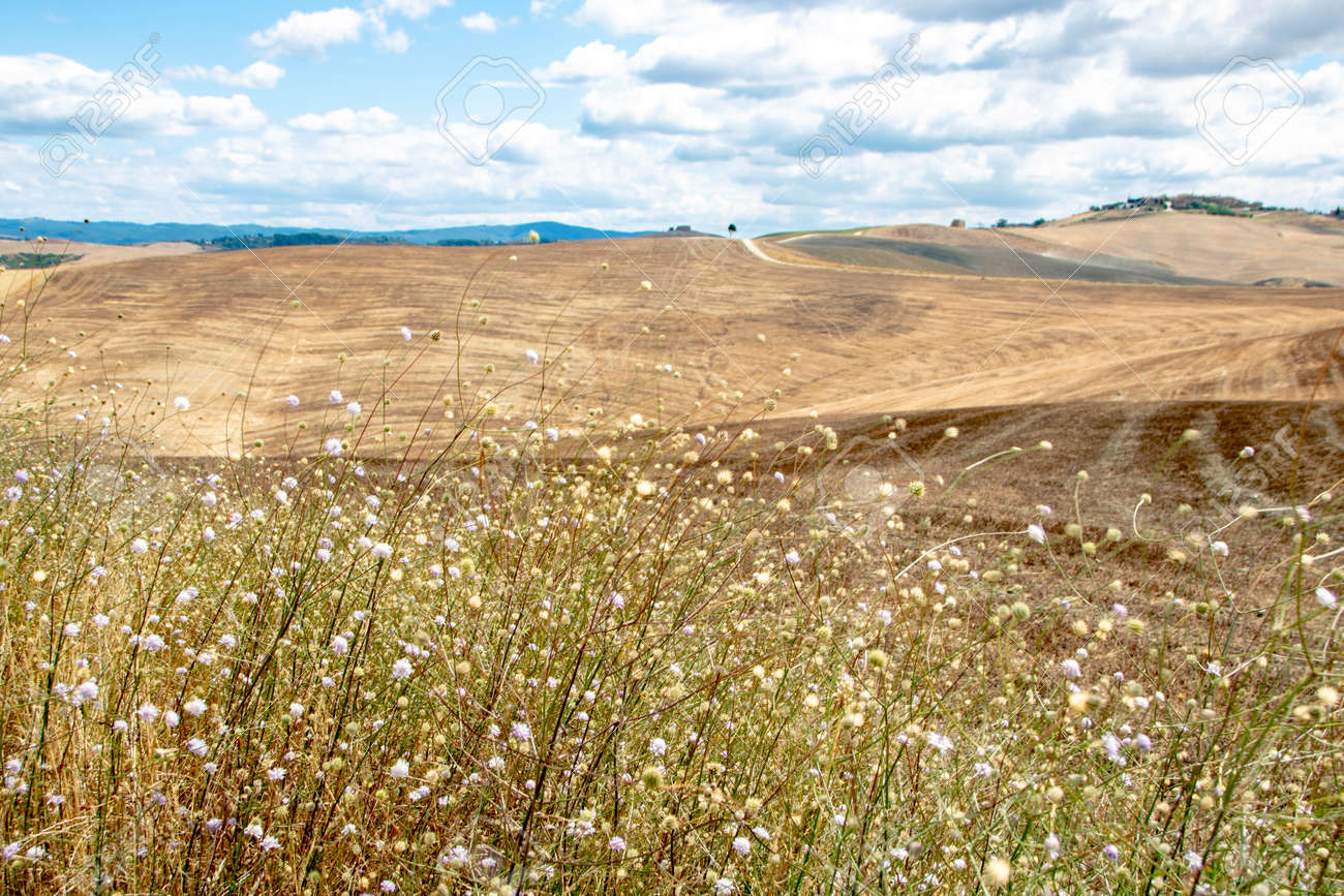 At Asciano - Italy - On august 2020 - Landscape of Tuscan countryside in Val d'Orcia - 160956641