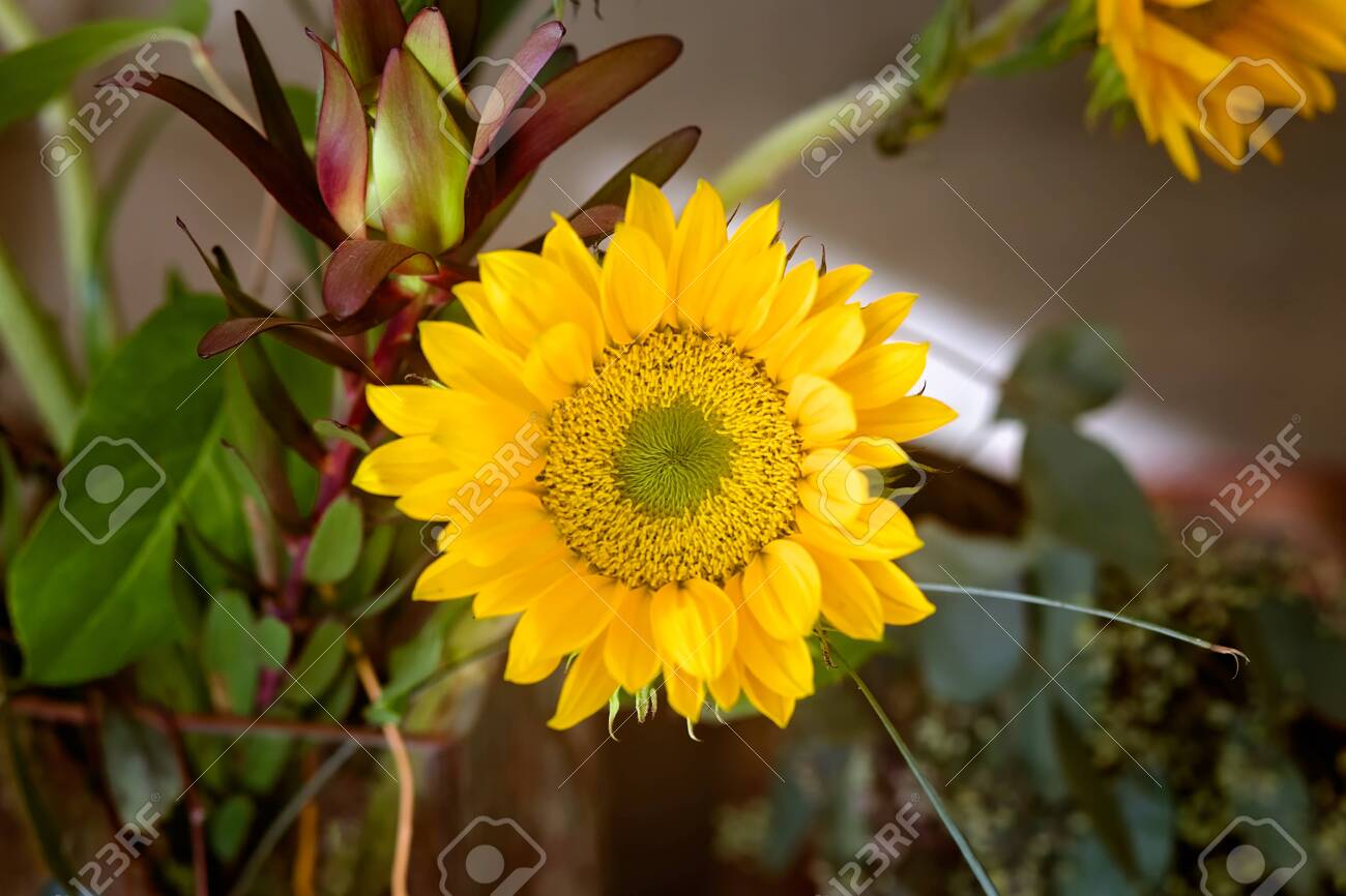 Bouquet Of Sunflowers And Eucalyptus In A Glass Vase Inside A Stock Photo Picture And Royalty Free Image Image 139154479