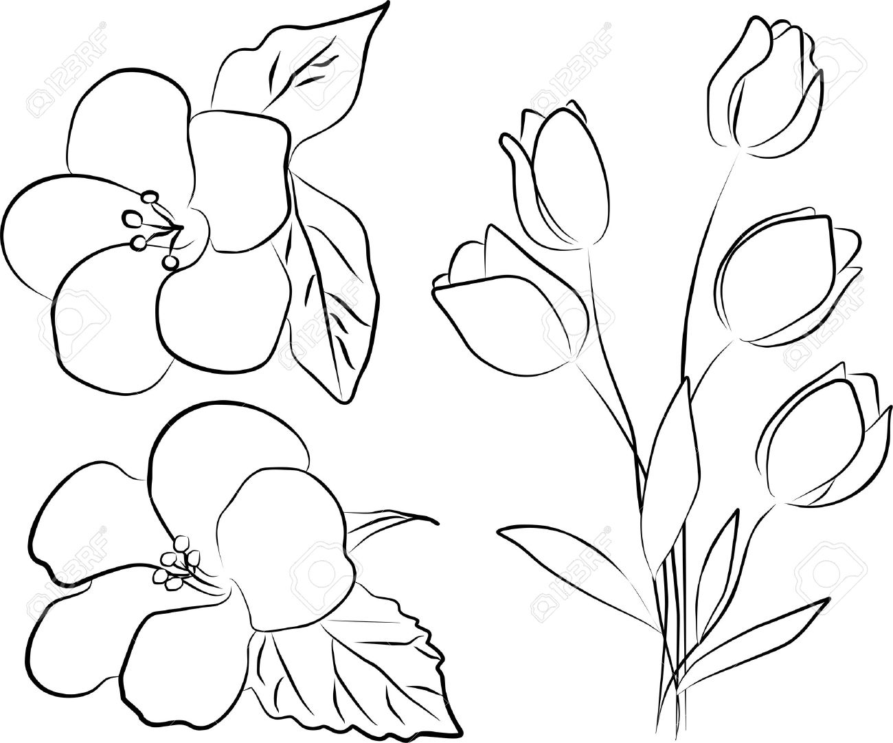 Two hibiscus flowers and tulip bouquet freehand stock photo stock photo two hibiscus flowers and tulip bouquet freehand izmirmasajfo