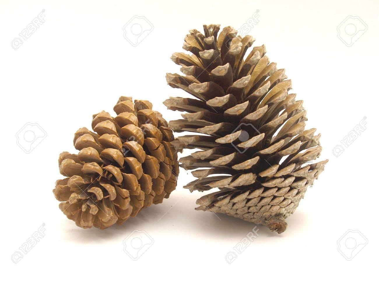 pine cones Stock Photo - 4284082