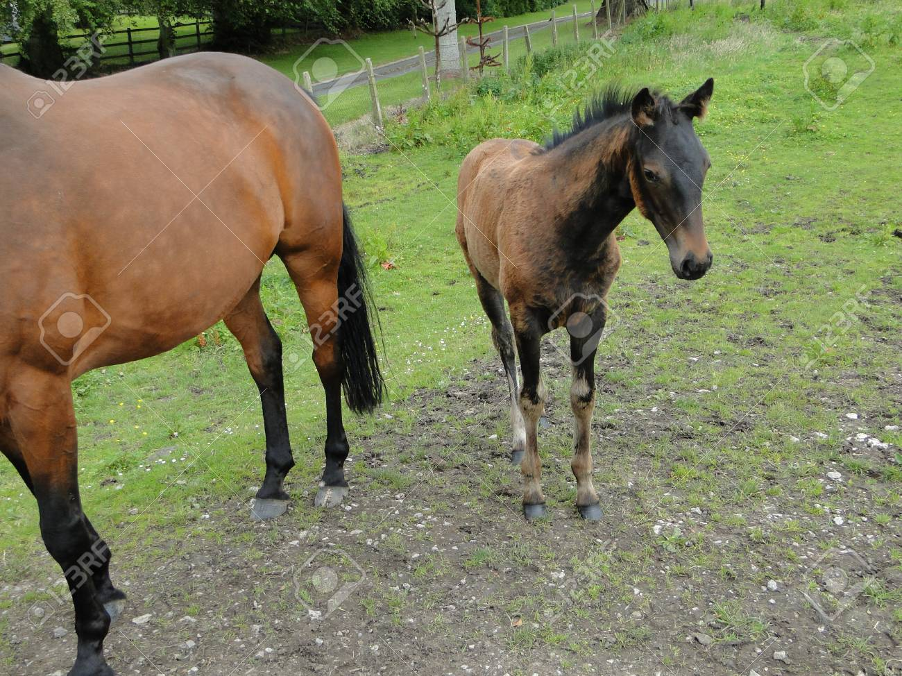 Mother Horse With Baby Stock Photo Picture And Royalty Free Image Image 102136934
