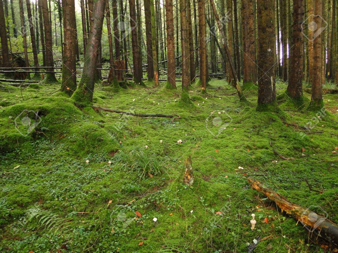 Lush Green Forest Floor Stock Photo Picture And Royalty Free