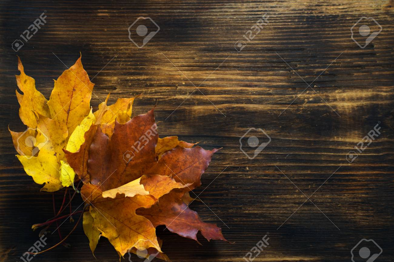 autumn background of fall leaves on the wooden board autumn maple