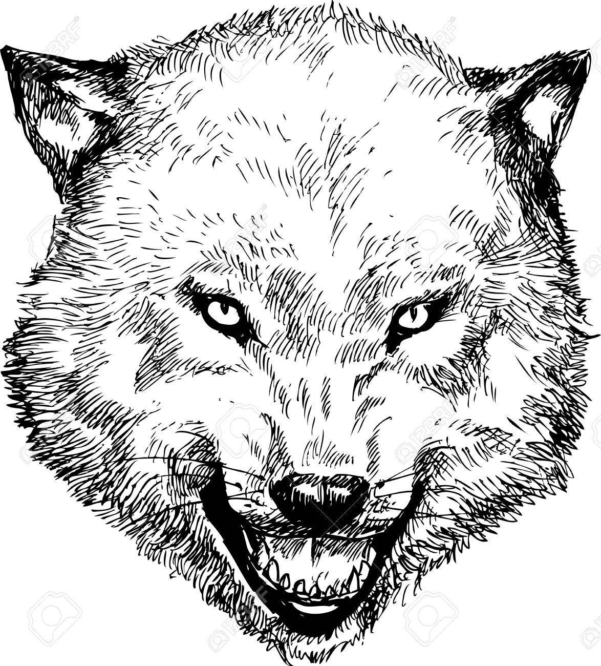 Vector Hand Drawn Wolf Head How To Draw