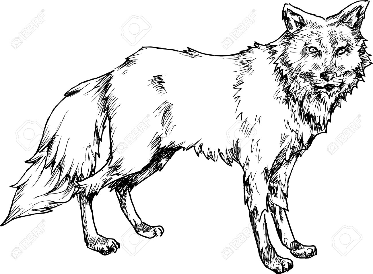 hand drawn wolf stock vector 25778348