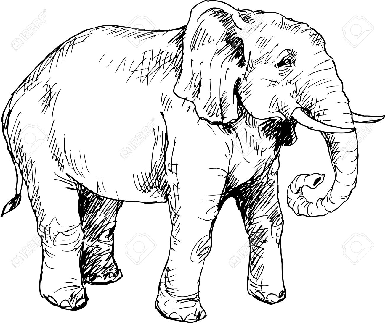 hand drawn elephant royalty free cliparts vectors and stock
