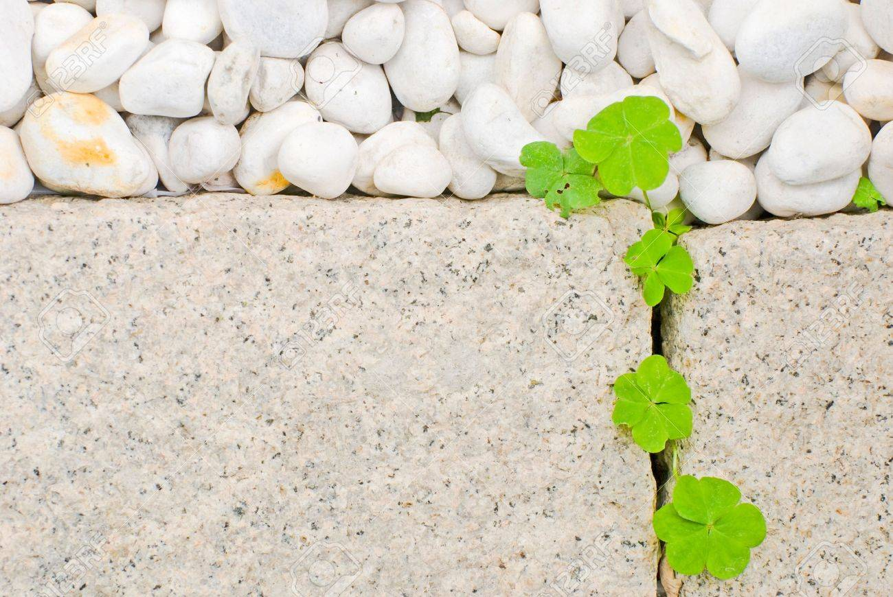 white pebble and newborn creeping oxalis leaf in Japanese garden Stock Photo - 6551410