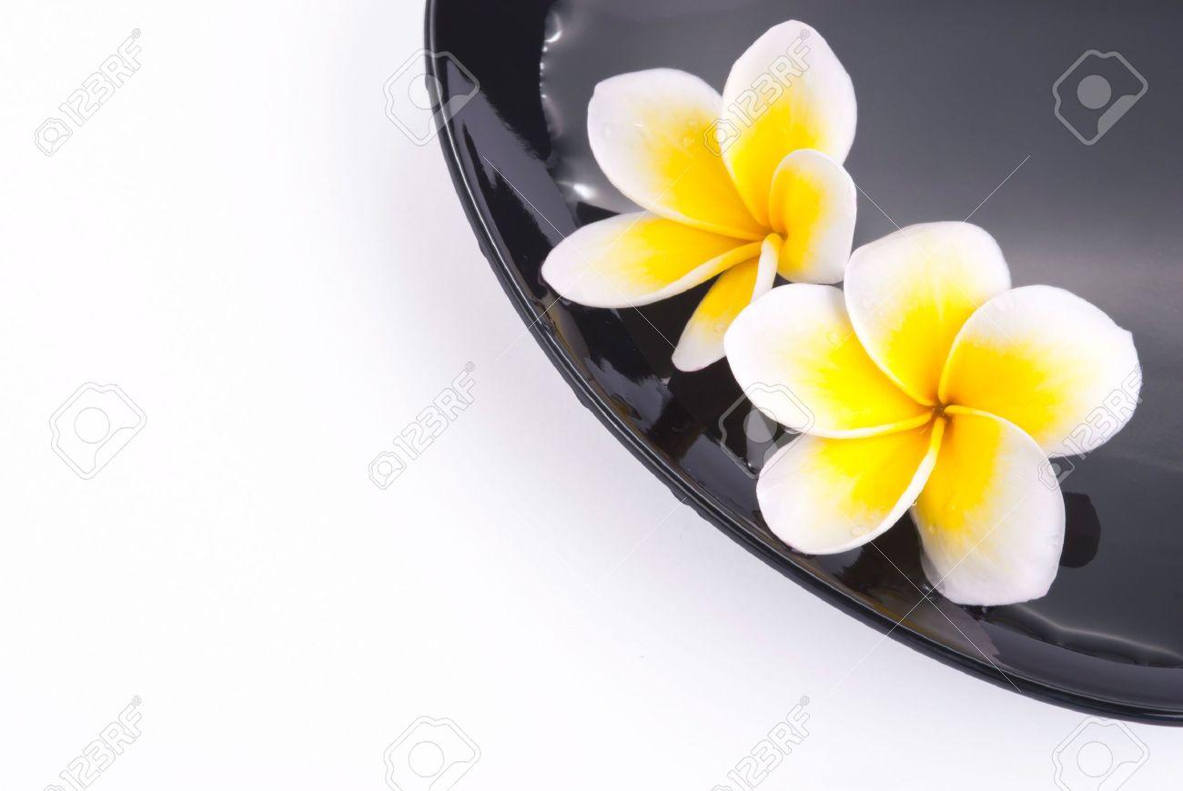 Leelawadee flower in the water on black bowl Stock Photo - 10286853