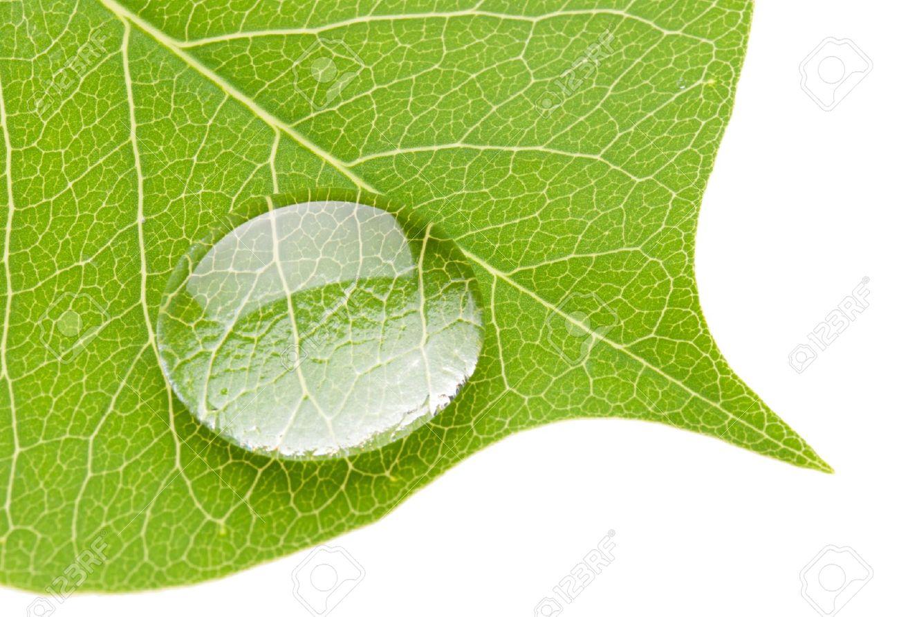 Water Transparent or Translucent Transparent Water Drop