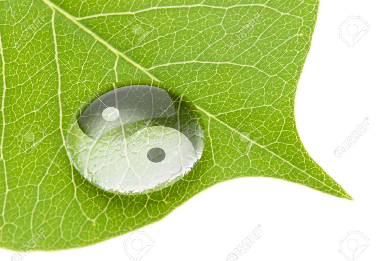 Yin yang symbol on water drop on fresh green leaf Stock Photo - 10358541