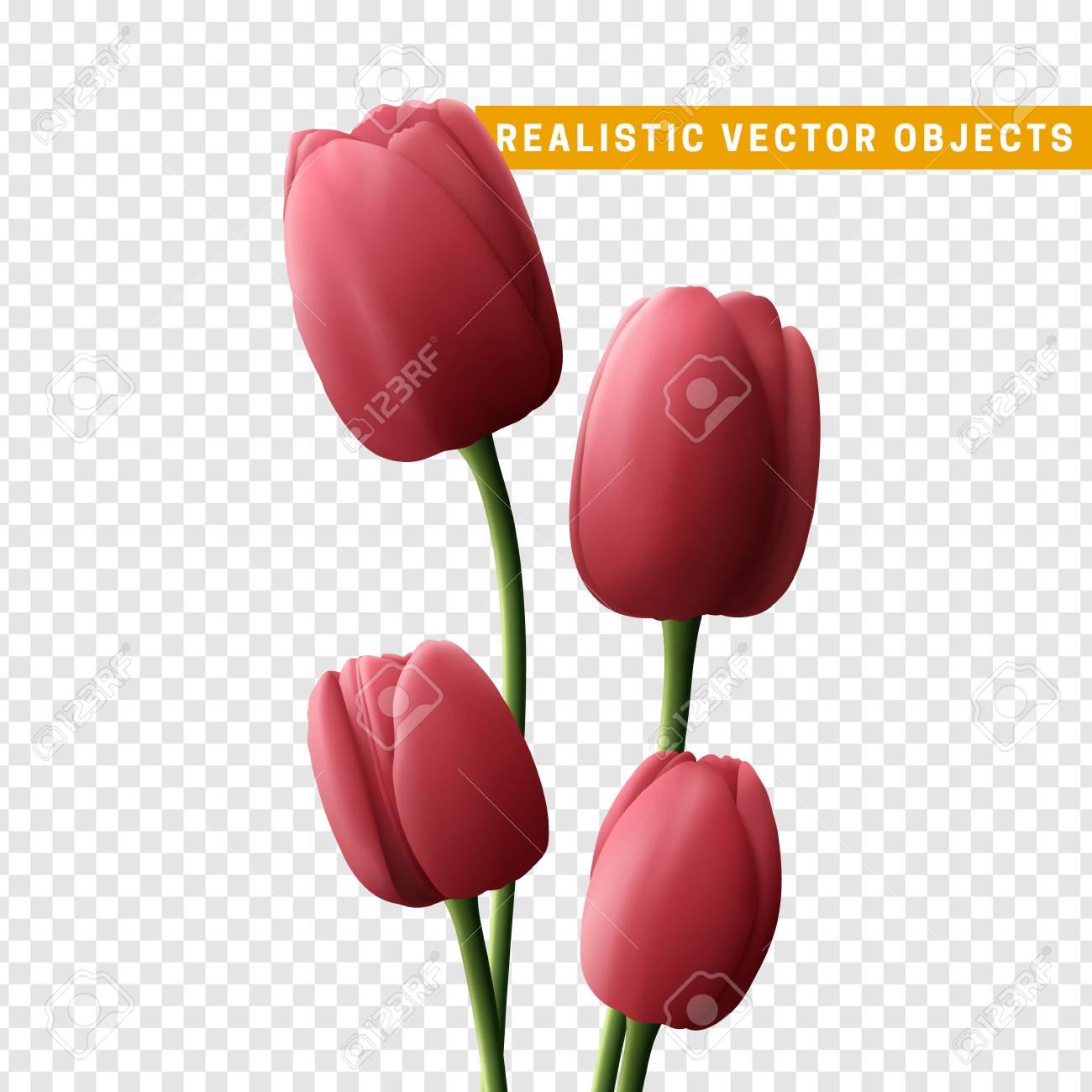 Tulipe fleur réaliste isolé sur fond transparent. Bouquet de tulipes roses