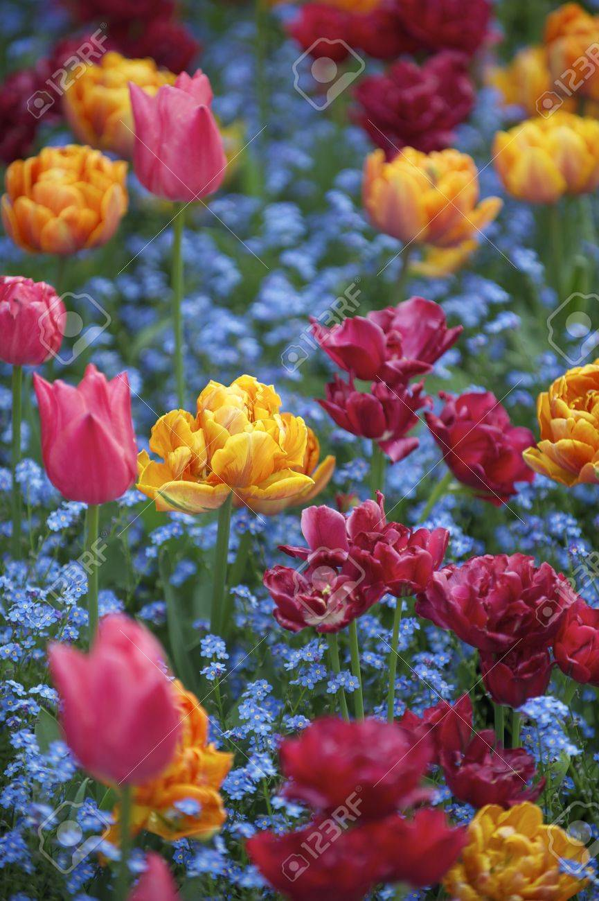 Bright Spring Flower Scene Of Colorful Pink Orange And Magenta