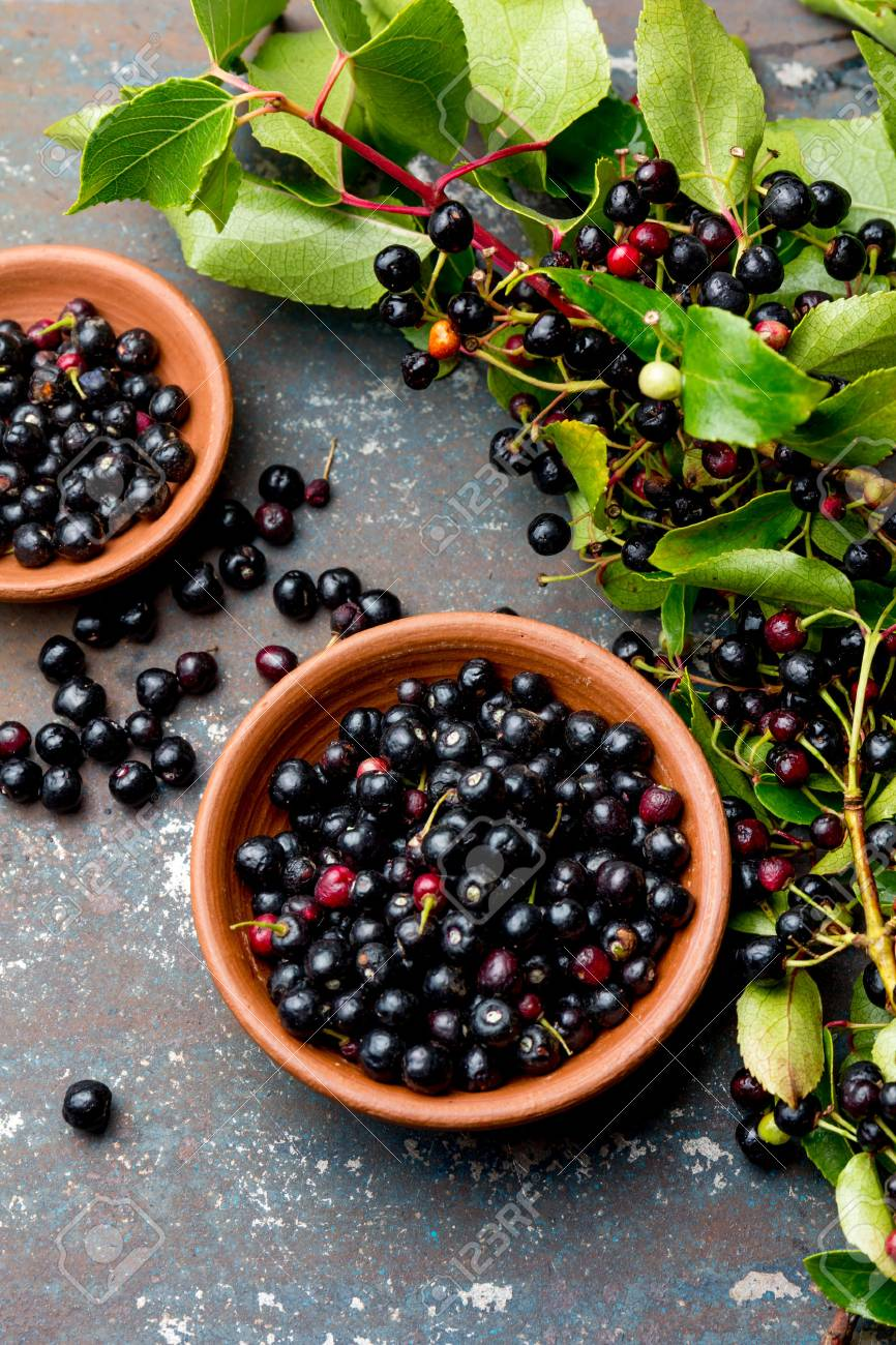 Superfood Maqui Berry Superfoods Antioxidant Of Indian Mapuche