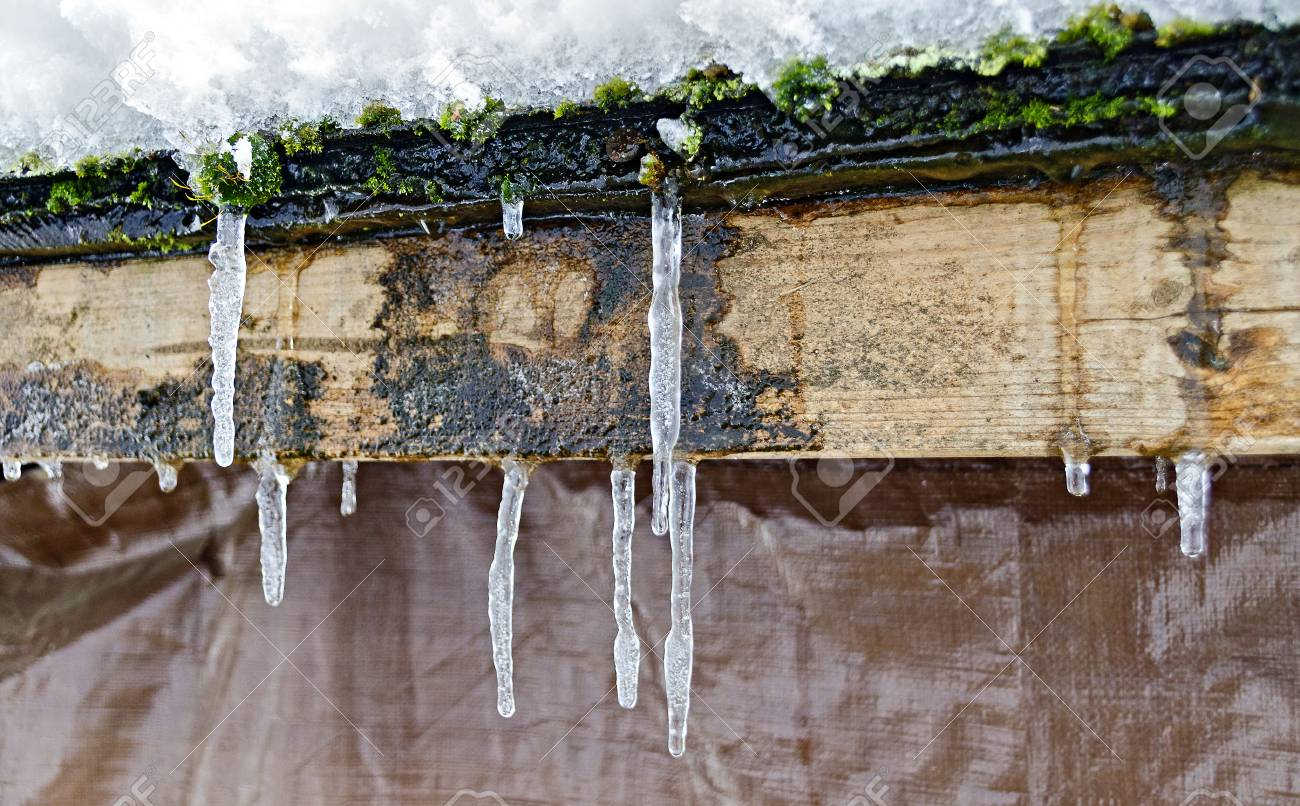 icicles on a snowy and moosy wooden bar covered by tarred roofing