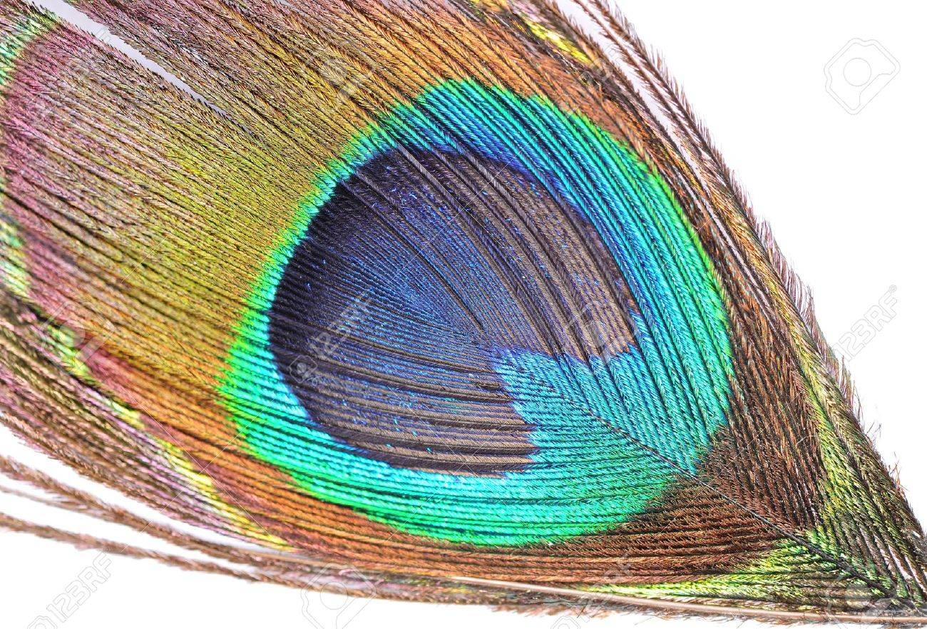 The abstract color background - peacock feather Stock Photo - 11707881