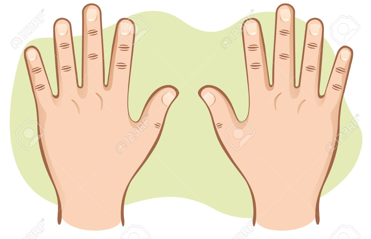 This Is Part Of The Human Body Hands Pair Of Open Top View Ideal