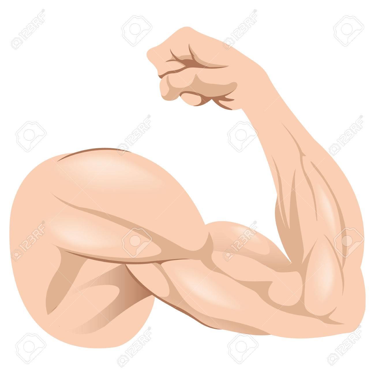 Ilustración que representa Humano Anatomía masculina muscular del brazo. Ideal para materiales institucionales y formación