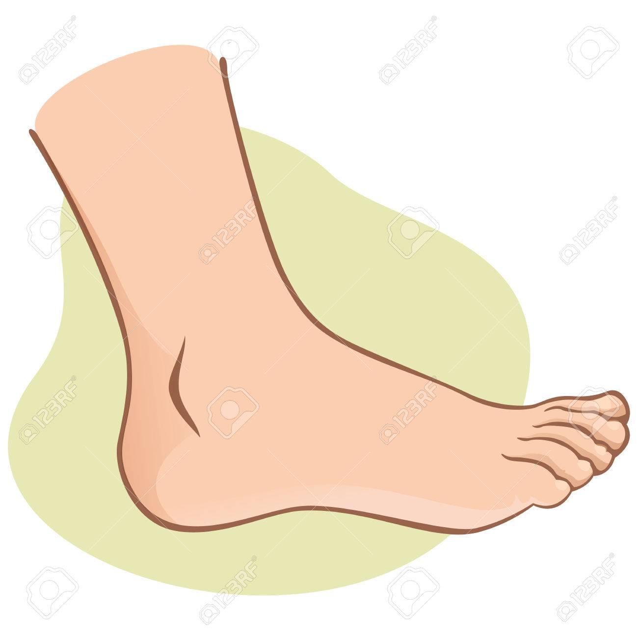 Lujo Diagrama De Pie Humano Imagen - Anatomía de Las Imágenesdel ...
