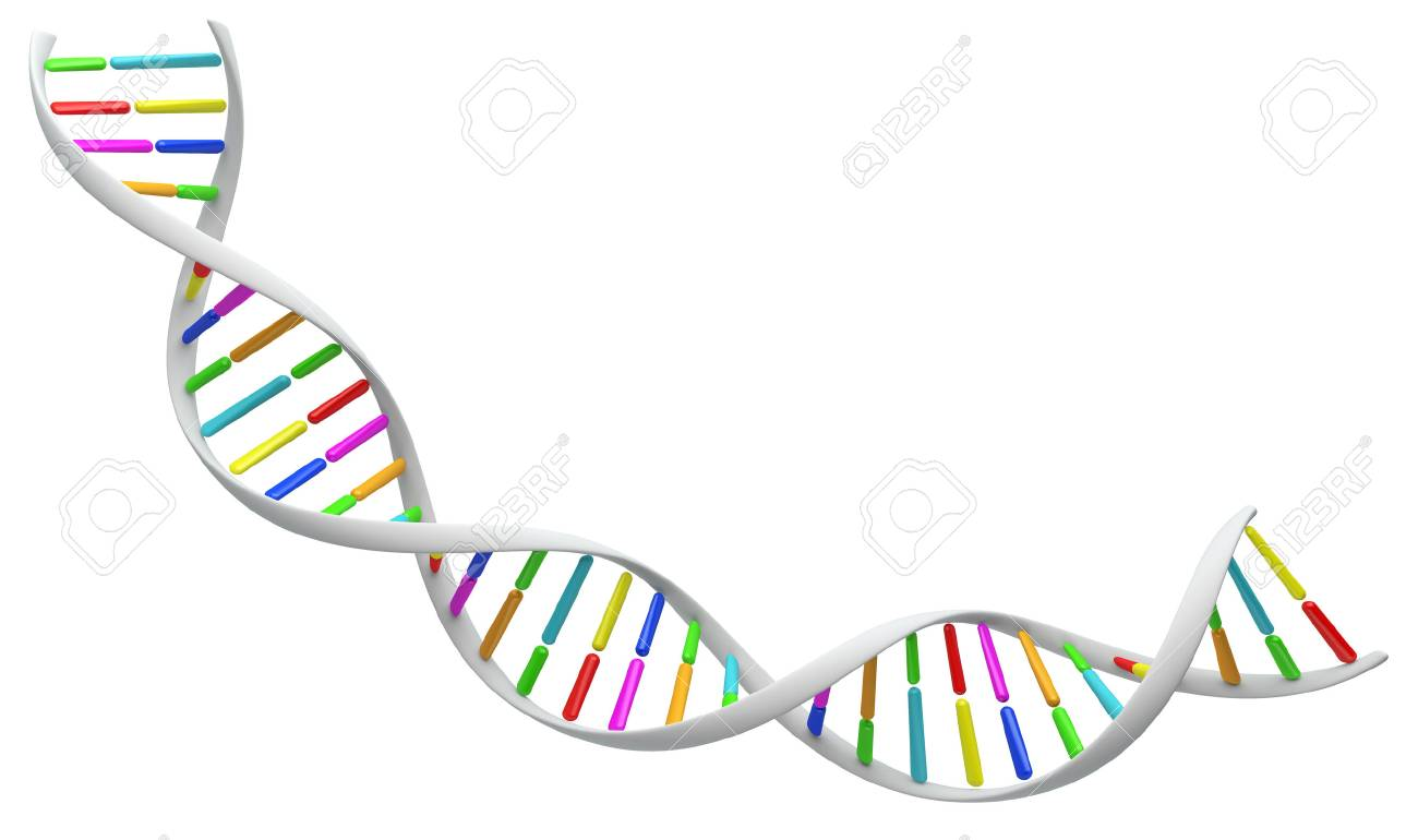 White spiral DNA strand. Isolated on a white background image. 3D illustration for design. - 63109164