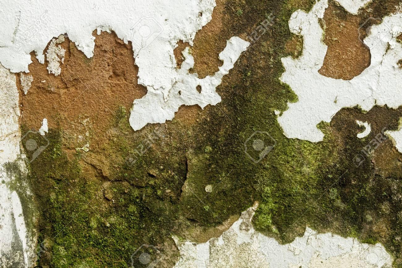 Primo Piano Di Funghi E Muffa Verde Peeling E Vernice Desquamazione ...