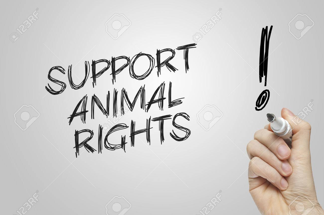 against animal rights essay Free essay on argument for animal rights available totally free at echeatcom, the largest free essay community.