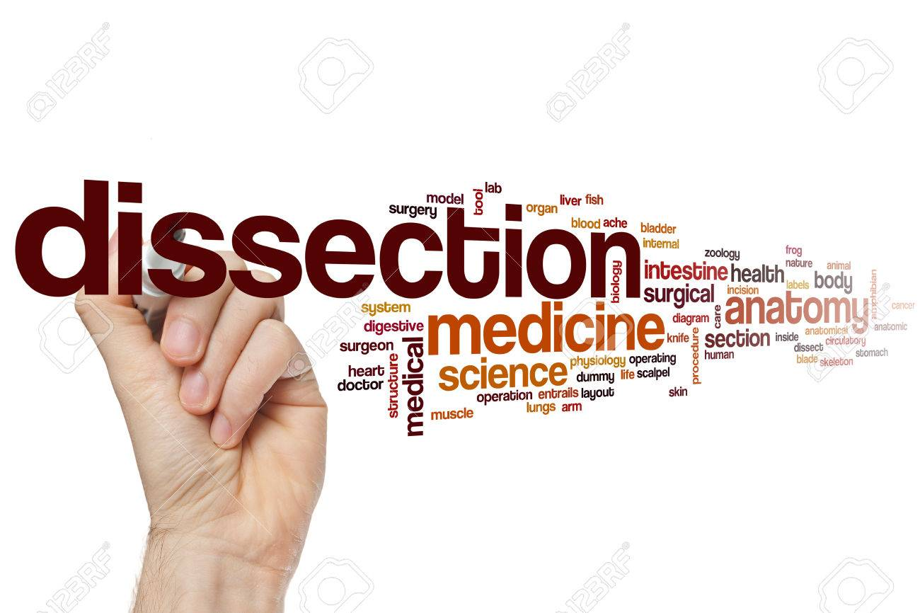 Dissection Word Cloud Concept Stock Photo Picture And Royalty Free