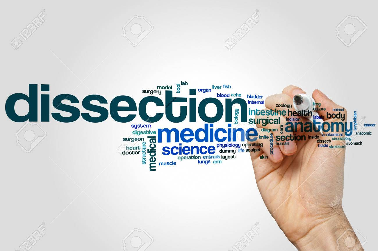 Dissection Word Cloud Concept Stock Photo, Picture And Royalty Free ...