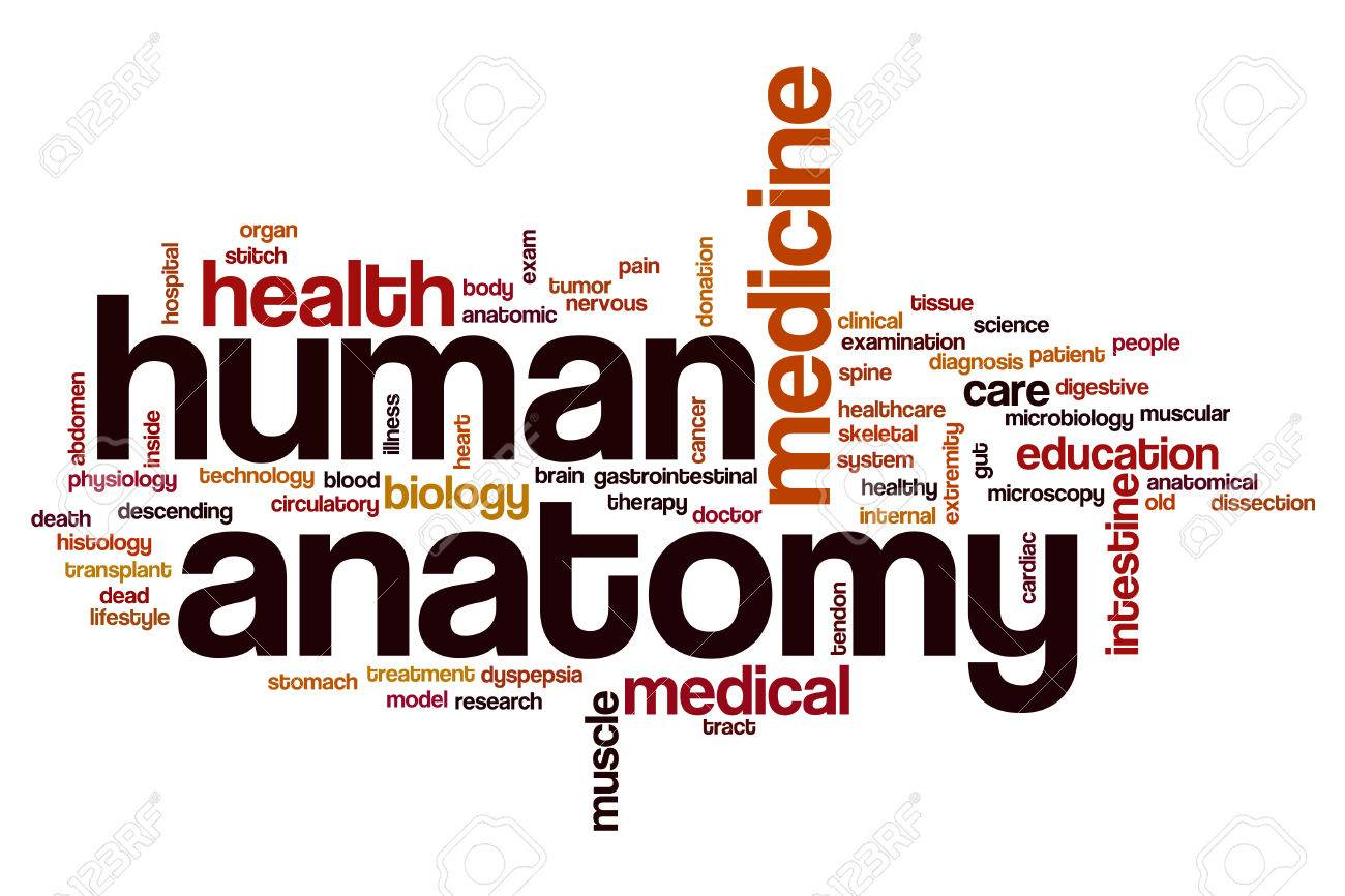 Human Anatomy Word Cloud Concept Stock Photo, Picture And Royalty ...