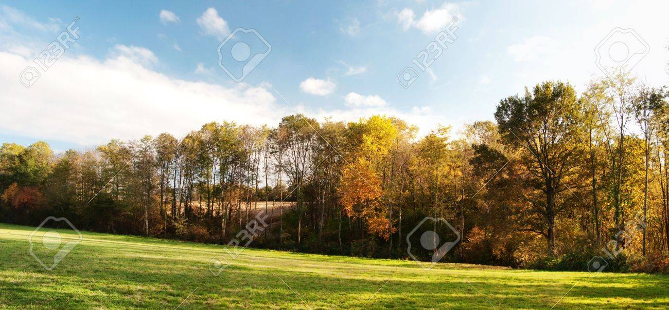 Panoramic scenic view of a countryside forest at fall Stock Photo - 5918239
