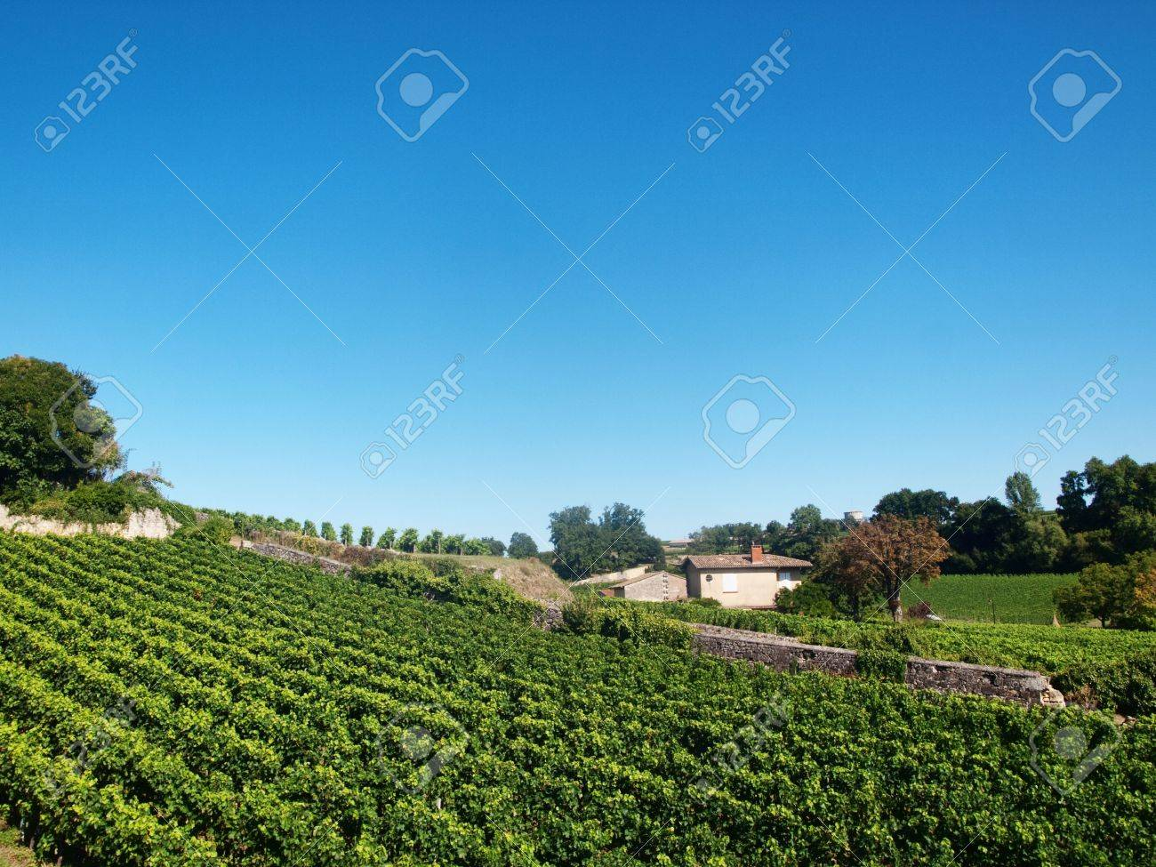 Vineyard in the village of Saint Emilion in France Stock Photo - 5934086