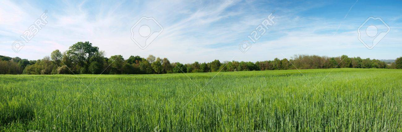 Panorama of a fresh green barley field in the French countryside Stock Photo - 7311865
