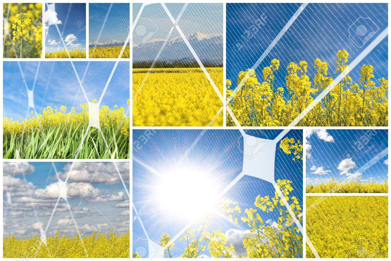 Blooming rapeseed with photovoltaic panel Stock Photo - 8034081