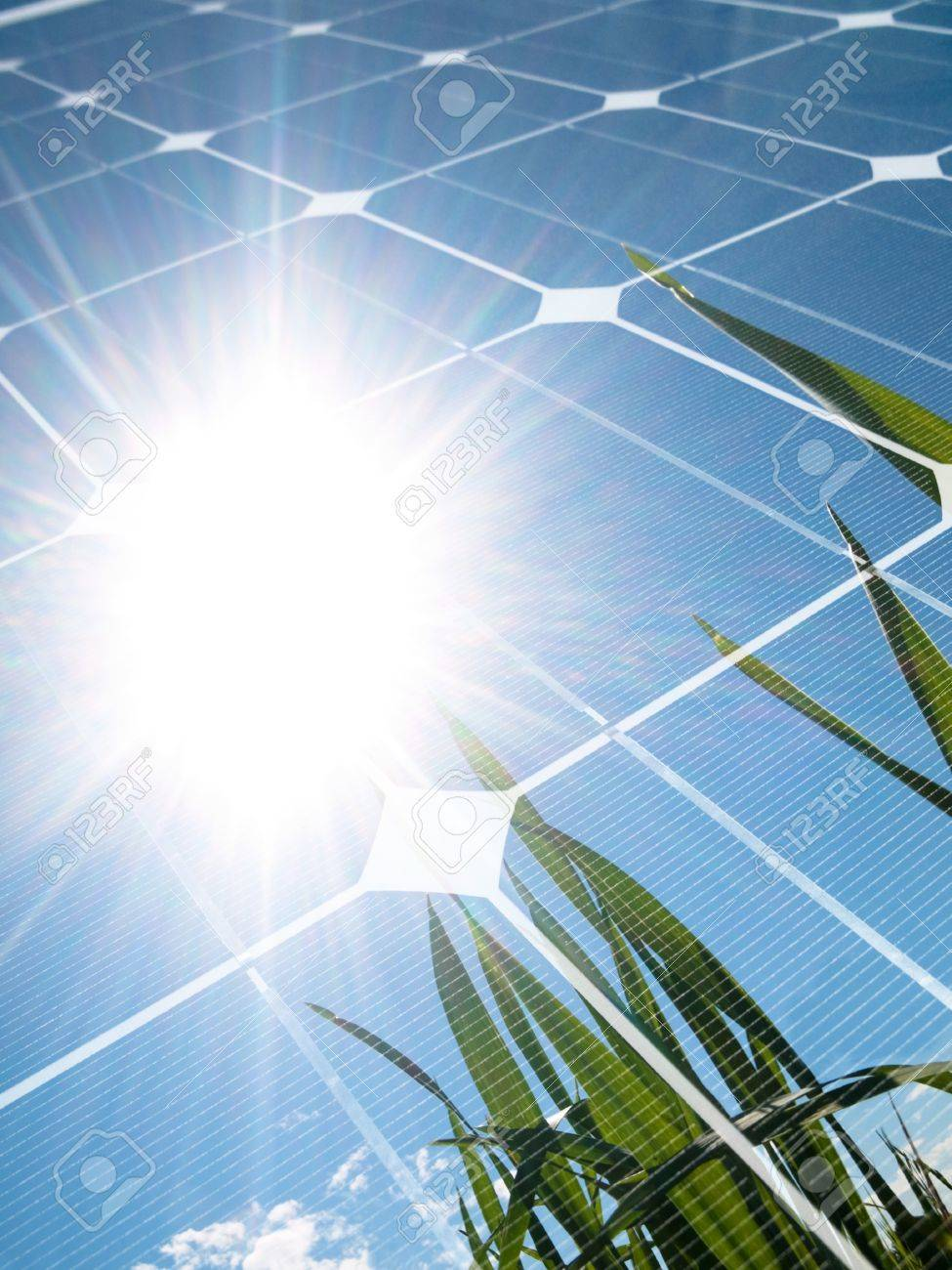 Green wheat  field against the sun with photovoltaic panel Stock Photo - 8034074