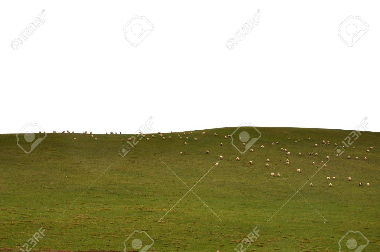 Plateau grassland sheeps Stock Photo - 5271541