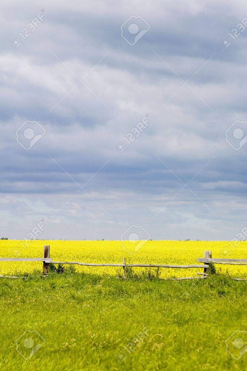 Prairie landscape with old fence line. Stock Photo - 271938