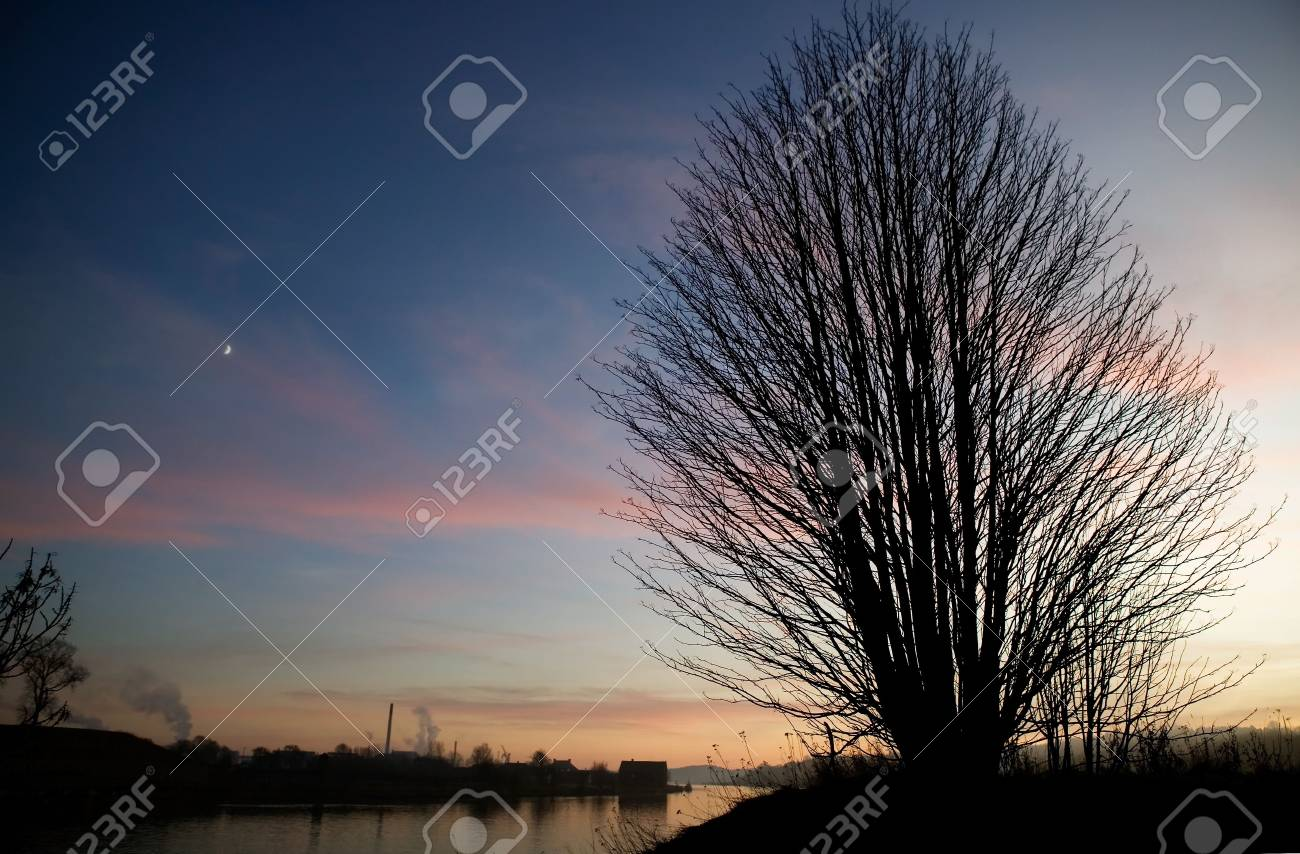 A single tree on a hill near the ocean at sunset. Stock Photo - 859245