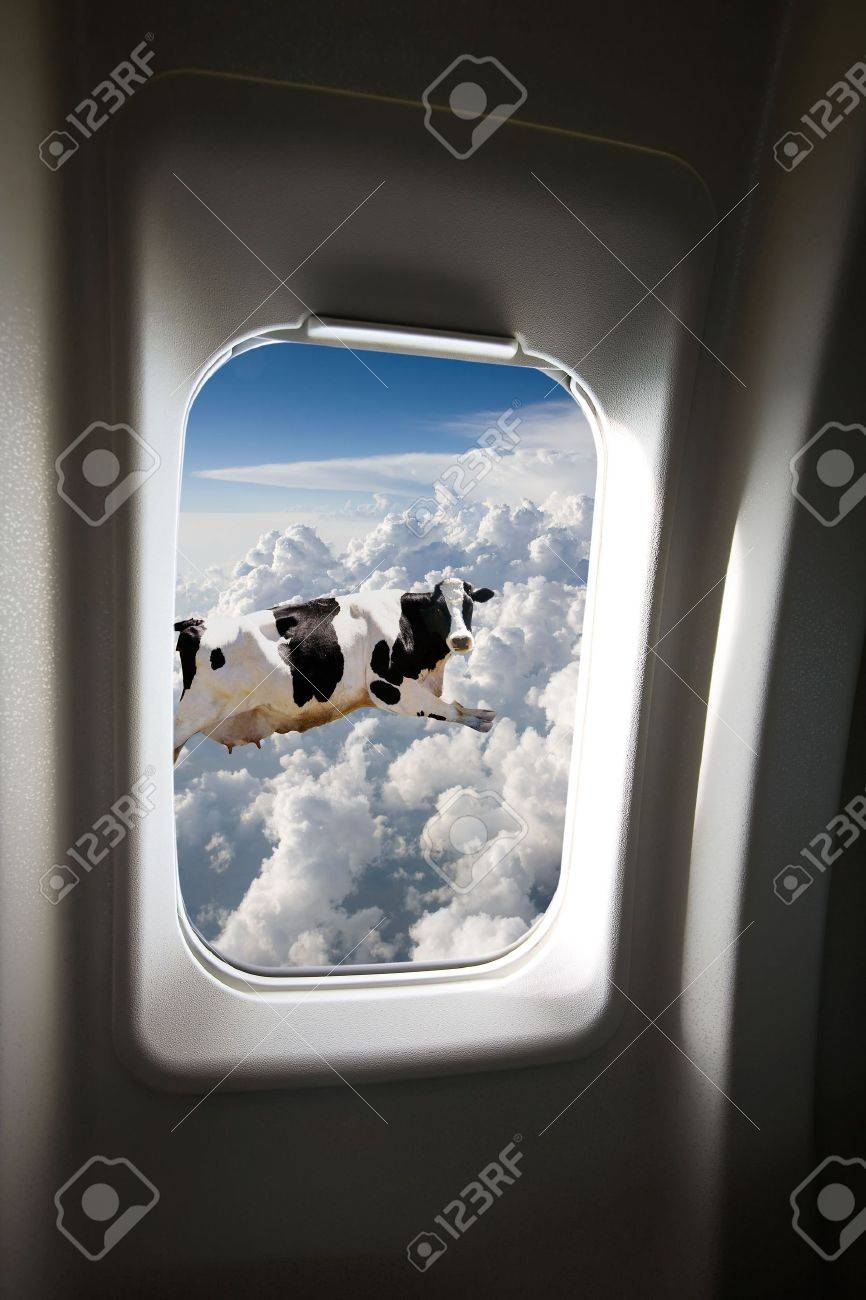 A Flying Cow Viewd Out A Plane Window Stock Photo Picture And