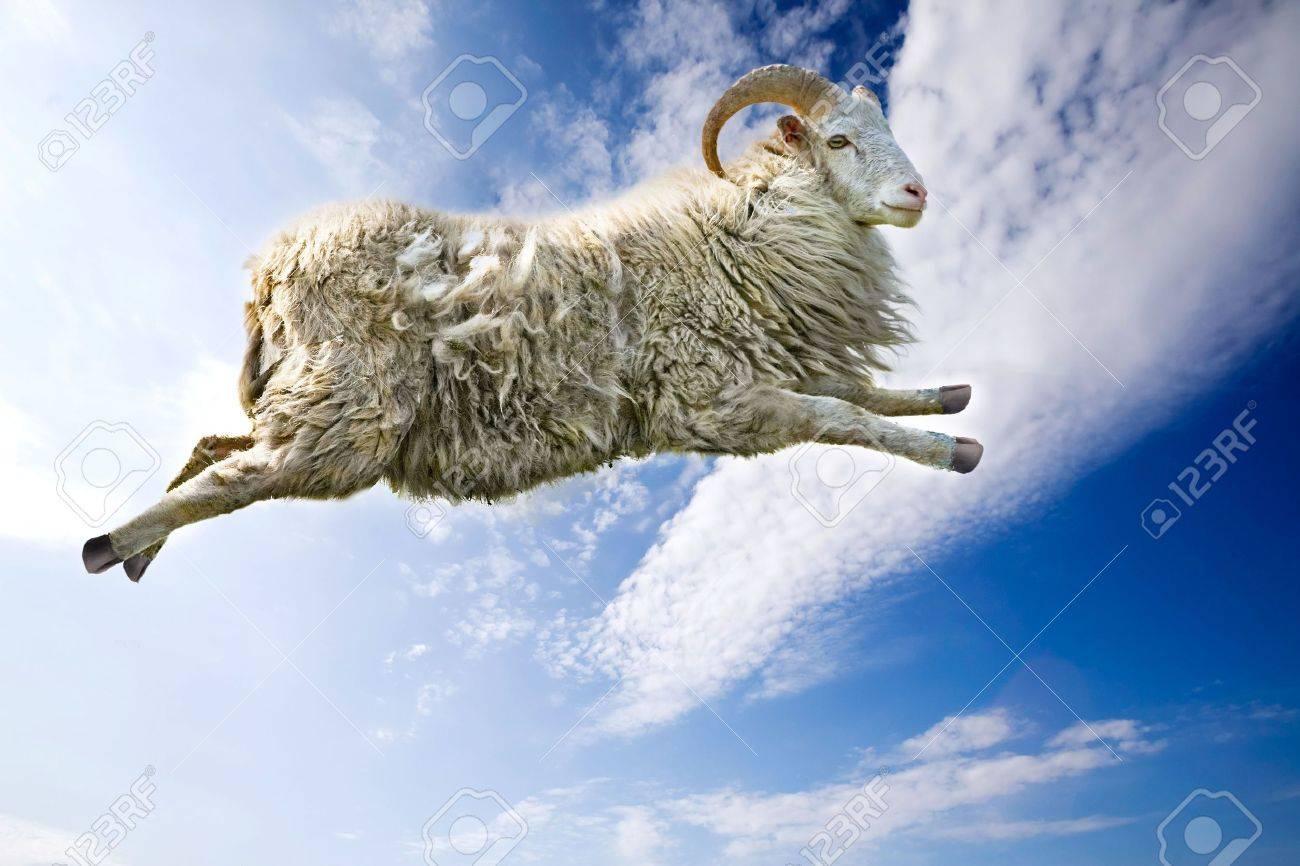 A flying sheep through a beautiful blue sky Stock Photo - 3292886