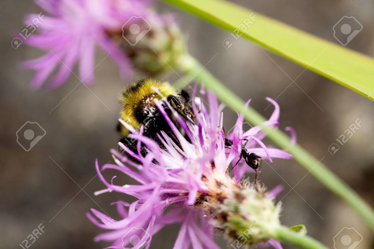 A bee and an ant on a flower in the summer Stock Photo - 3457638