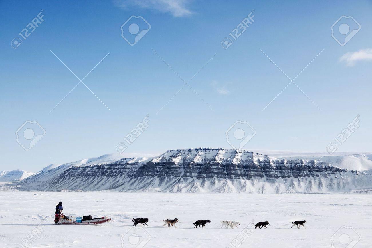 a dog sled running on a barren winter landscape stock photo
