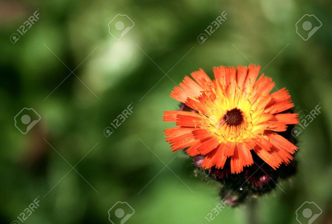 Details of a daisy like orange wild flower stock photo picture and details of a daisy like orange wild flower stock photo 1413133 izmirmasajfo