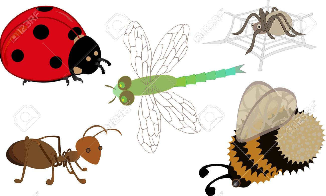 Cute cartoon insects: a ladybird, ant, dragonfly, bumblebee and a spider on his web Stock Vector - 7936391