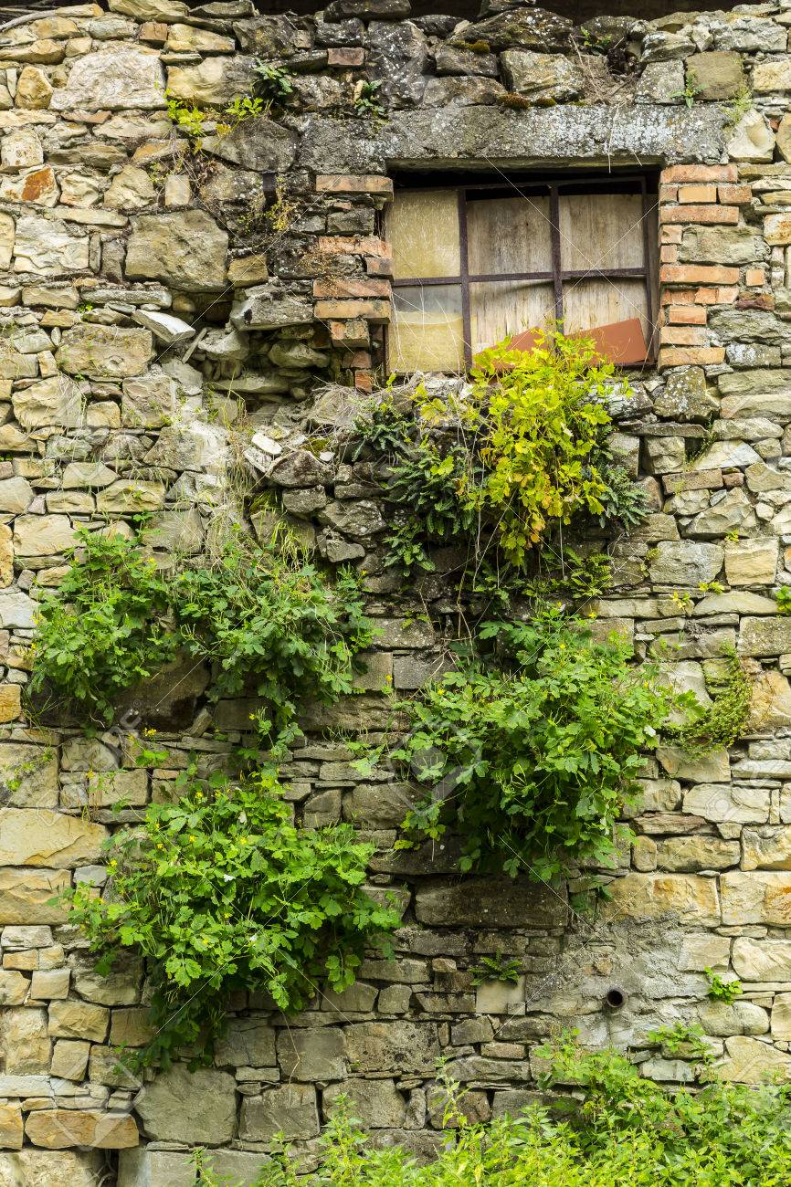 An Old Building Wall And Window Plants Growing Out Of The Brickwork Stock Photo Picture And Royalty Free Image Image 29378707