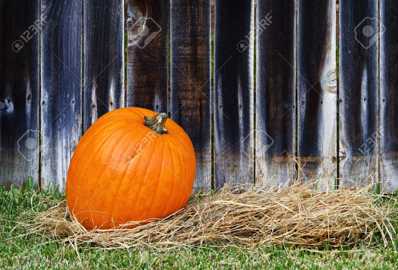 Single pumpkin on hay against wooden fence Stock Photo - 15706749