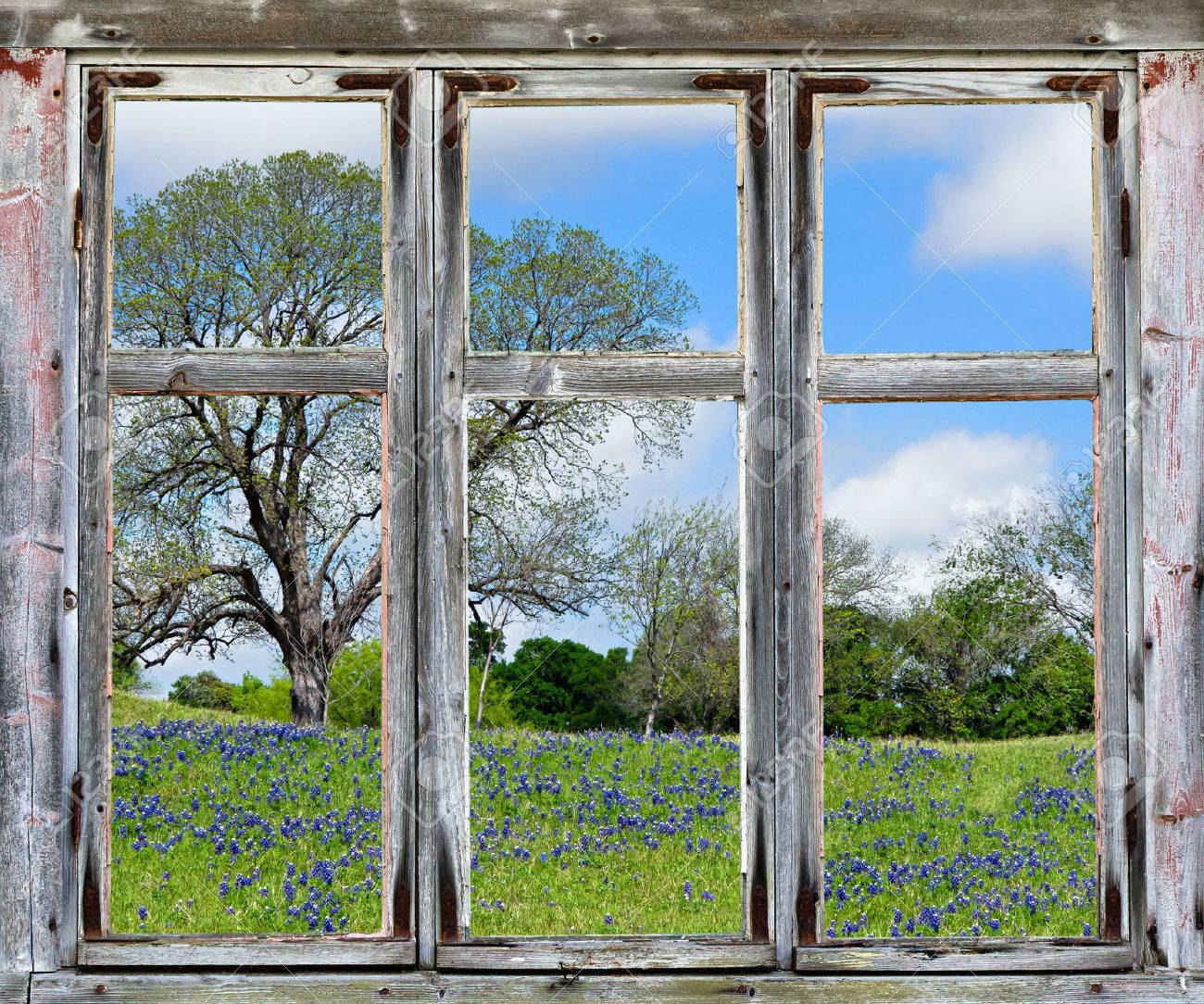 Country Spring Vista With Texas Bluebonnets, Seen Through An.. Stock ...