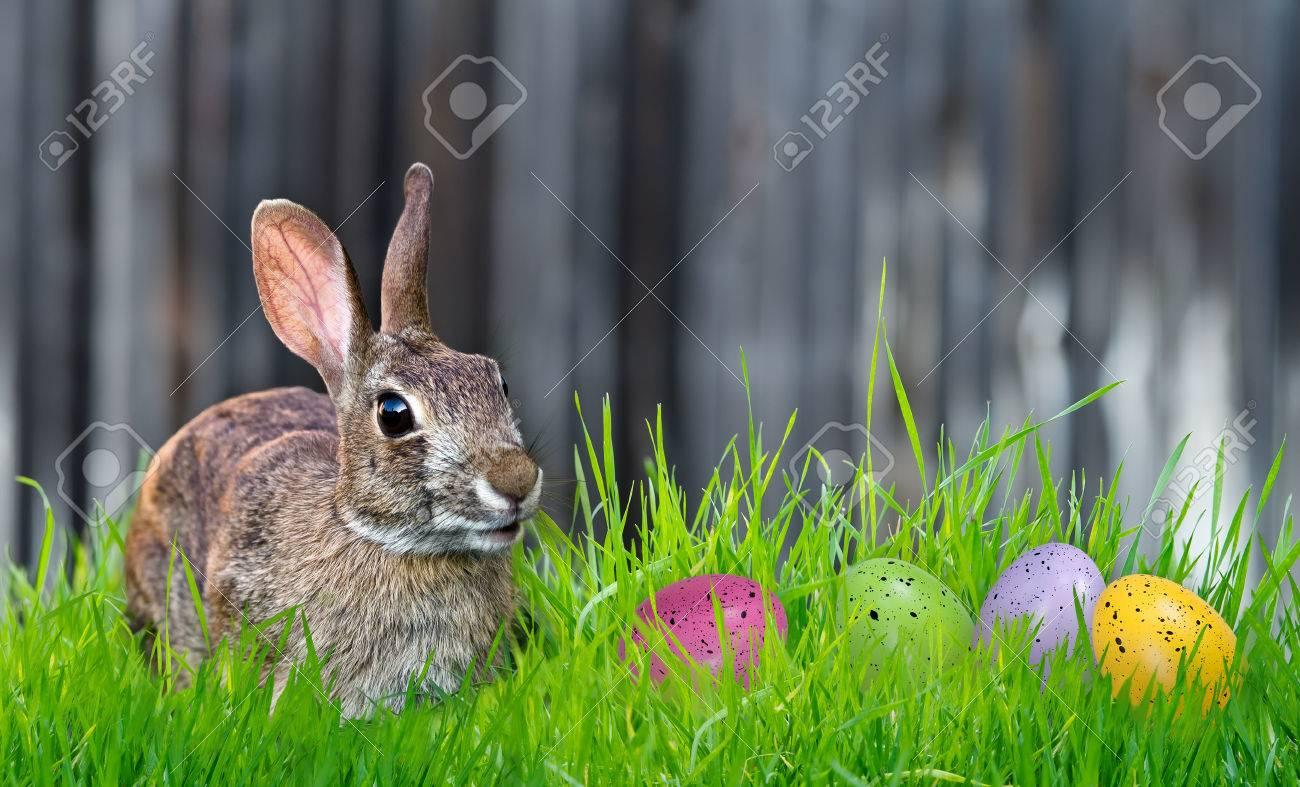 Enthousiaste consultant lapin et oeufs de Pâques colorés dans l'herbe. Copiez espace. Banque d'images - 26687507