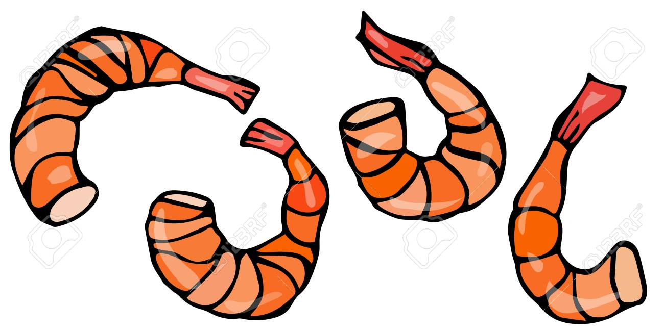 set of cooked shrimps vector seafood prawn realistic illustration rh 123rf com shrimp clip art images shrimp clipart graphics
