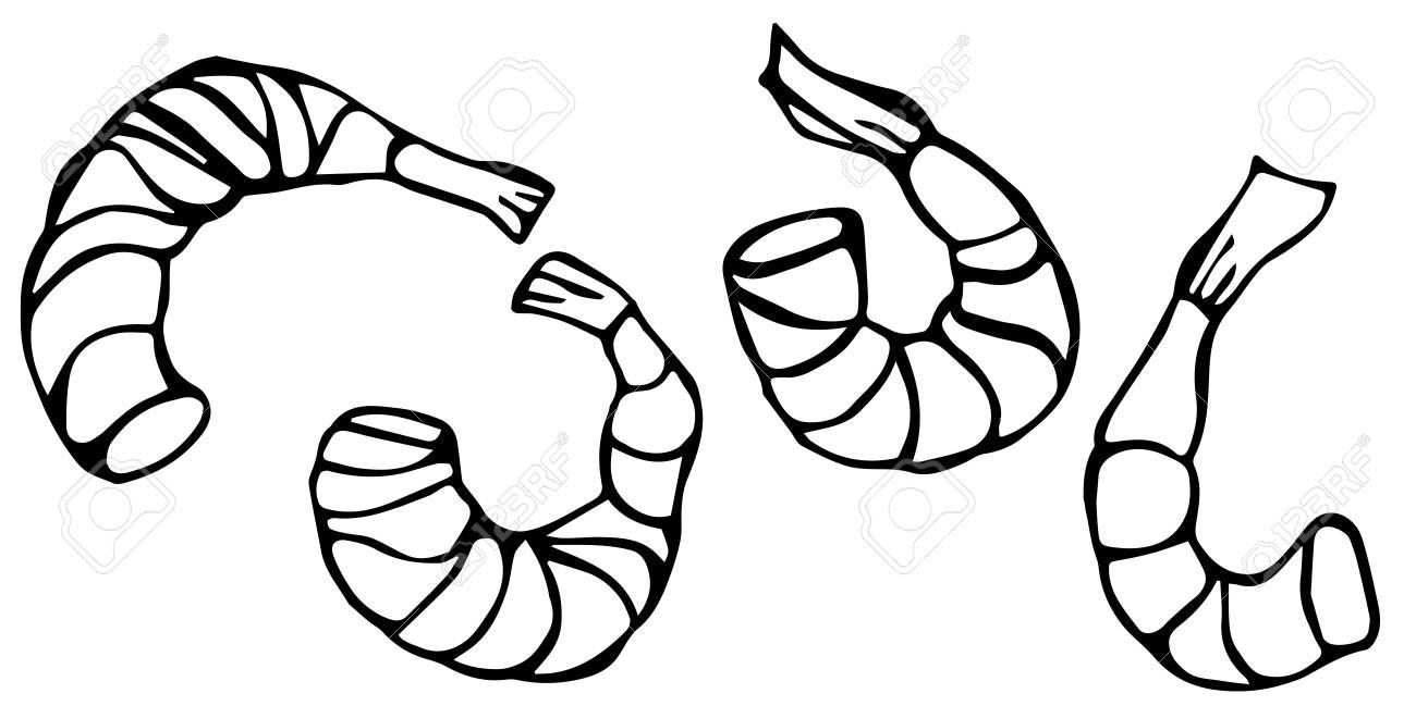 set of cooked shrimps vector seafood prawn realistic illustration rh 123rf com Chicken Dinner Clip Art Cajun Shrimp Clip Art